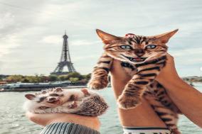 세계 여행하는 벵갈고양이와 고슴도치의 여행기