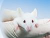 농식품부, 2019년 실험동물 보호·복지 관련 실태조사 발표