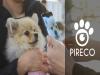 반려동물 생체인식 솔루션 전문기업 파이리코, 펫박스와 MOU 체결
