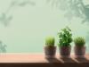 코코브라운, 스튜디오코코 브랜드에서 '지구사랑 재배세트' 3종 출시