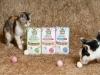 네슬레 퓨리나 '펜시피스트', 천연 재료로 만든 프리미엄 고양이 간식 출시