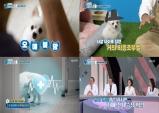 펫비타민, 강아지도 치매에 걸릴 수 있다?... 반려견 '인지기능장애'