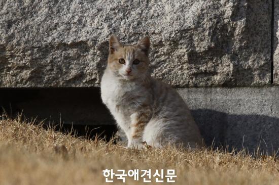 크기변환_국회에서 만난 길고양이.JPG