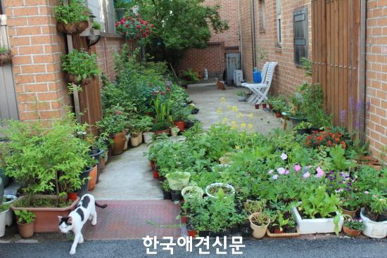 크기변환_▲이새벽 작가가 키우는 식물들.JPG